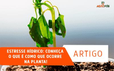 Estresse Hídrico: Conheça o que é como que Ocorre na Planta!