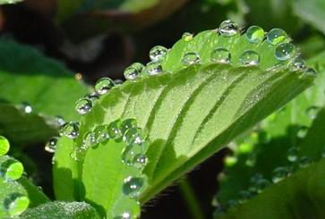 Evapotranspiração na Agricultura