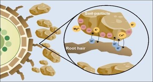 O que é CTC do solo