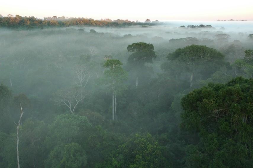 Umidade na Floresta Amazônia