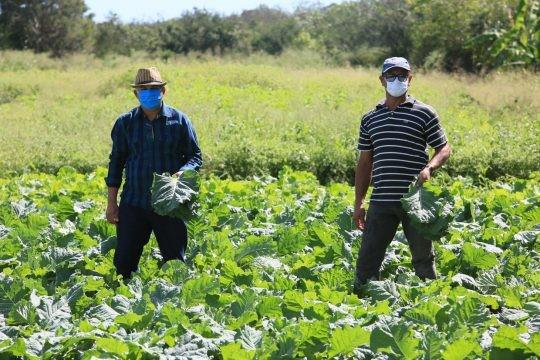 Agricultores em cenário pandêmico