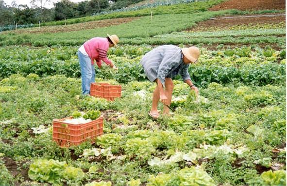 Produção Agrícola - Agricultura Extensiva