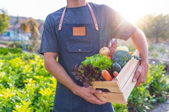 Produção Agrícola - Agricultura Orgânica