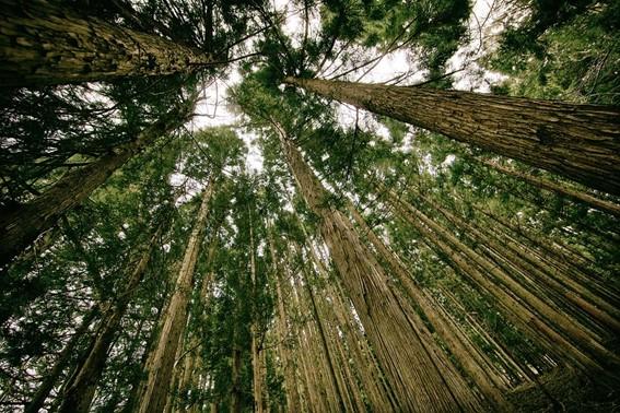 Cota de Reserva Ambiental