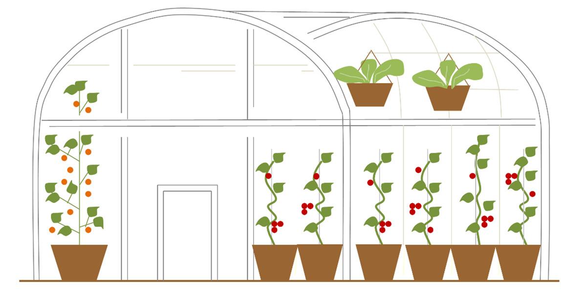 Estufa para ornamentais e hortaliças