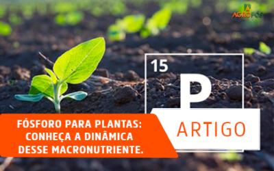 Fósforo para plantas: Conheça a dinâmica desse macronutriente!