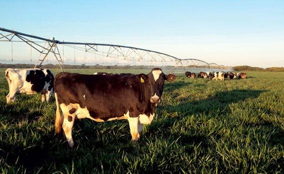 Irrigação para Pastagens