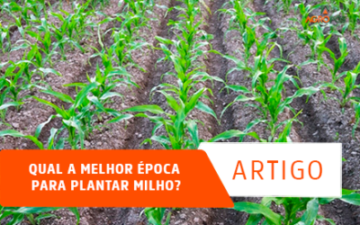 Qual a Melhor Época para Plantar Milho?