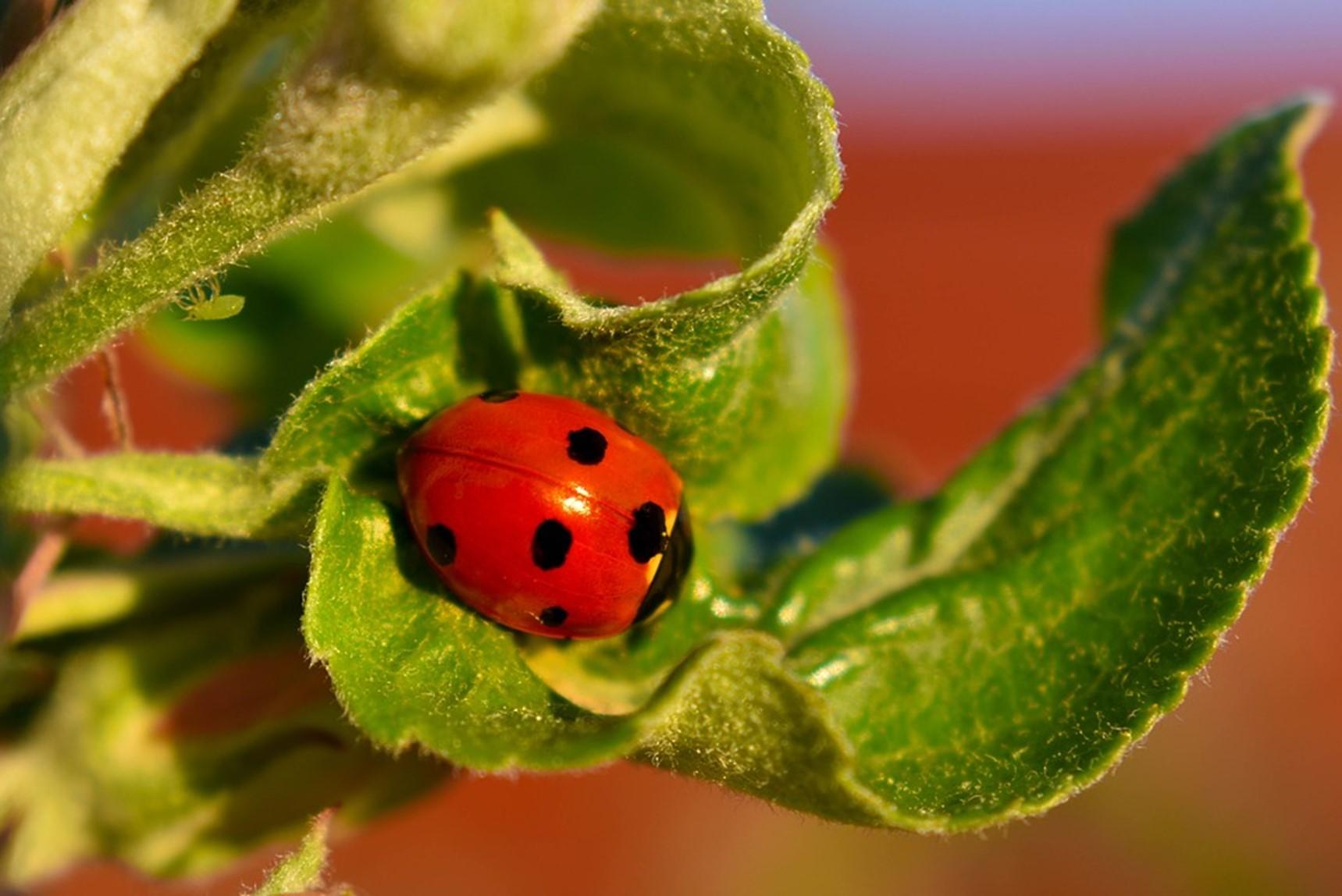Como acabar com pulgão nas plantas