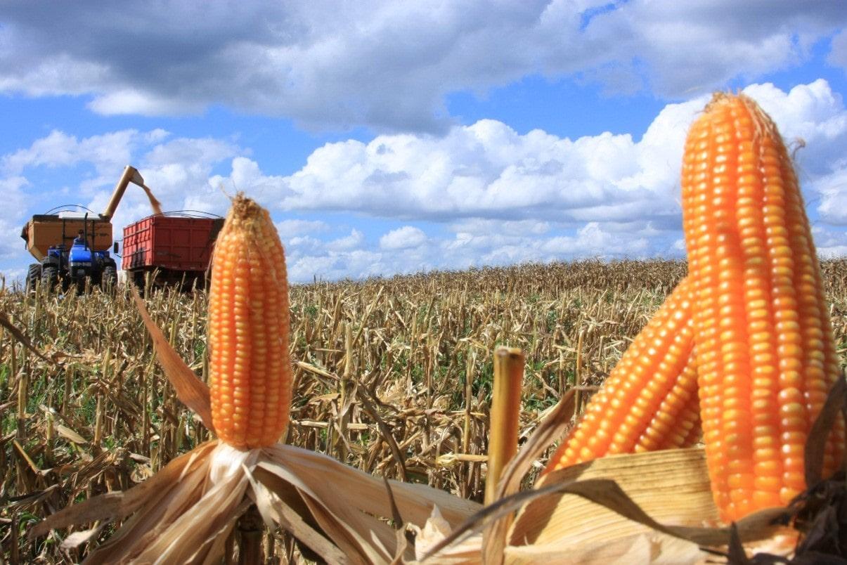 Entressafra do milho