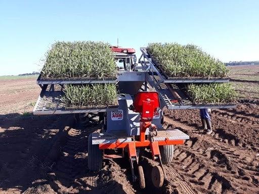 plantadeira - Transplantadora Agrícola