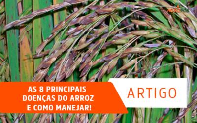 As 8 Principais doenças do arroz e como manejar!