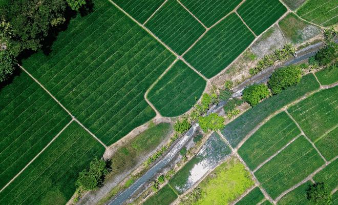 divisão de terra em hectare
