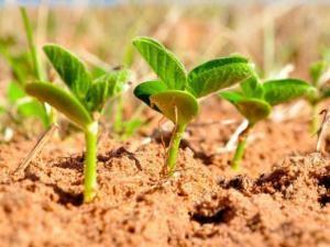 Estádios vegetativos do ciclo da soja