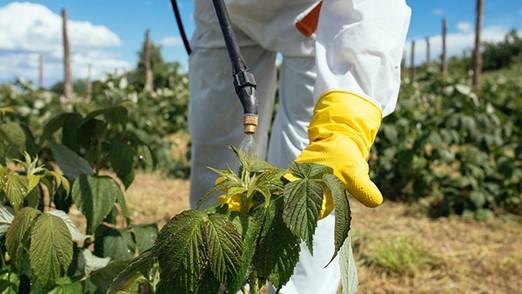 Uso de EPI na aplicação de inseticida natural