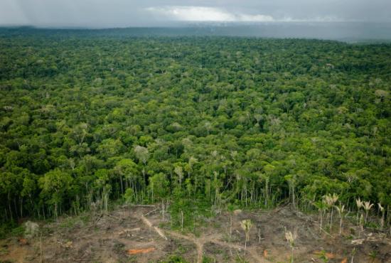 Código Florestal Brasileiro