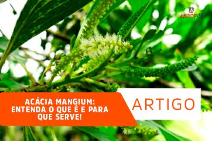 Acácia Mangium: Entenda o que é e para que serve!