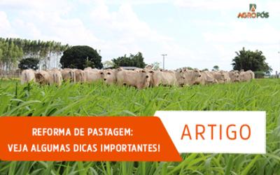 Reforma de Pastagem: Veja Algumas Dicas Importantes!