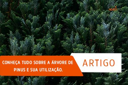 Conheça tudo sobre a árvore de Pinus e sua utilização.